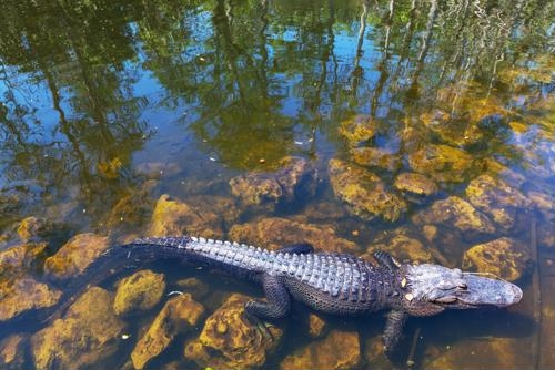 ACOs vs CINs: Comparing alligators to crocodiles